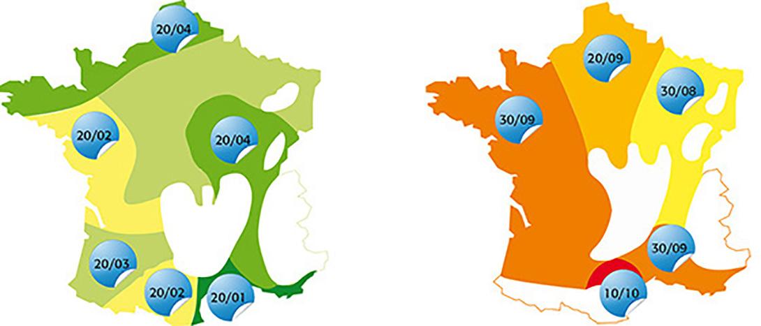 Dates de semis : printemps (à gauche) et fin d'été (à droite) sont les périodes les plus favorables.